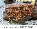 Small photo of hords of ladybugs
