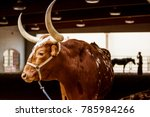 Steer  Emerging From Rodeo Bar...