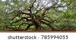 Angel Oak Tree On St. Johns...
