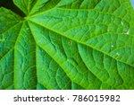 Under Green Leaf. Blurred...