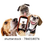 cute beagle looking at the... | Shutterstock . vector #786018076
