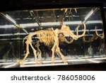 Small photo of December 7, 2017: Miami Beach: A wooly mammoth sealed in a glass case in 24-karat gold at the Faena Hotel in Miami Beach. The wooly mammoth has been extinct for a long time.