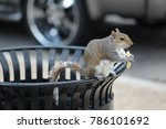 A Squirrel On A Bin