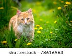 Red Greek Stray Cat Outdoor In...