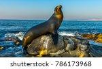 San Diego, California - USA. Close up of a Californian sea lion (Zalophus californianus) posing on a rock in the reefs of La Jolla beach.