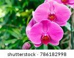 orchid flower in garden at...   Shutterstock . vector #786182998