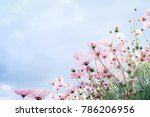 cosmos flowers background | Shutterstock . vector #786206956