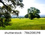 landscape of cultivation in... | Shutterstock . vector #786208198