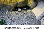 water dragon under a stone | Shutterstock . vector #786217705