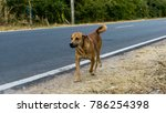 the dog is walking on the... | Shutterstock . vector #786254398