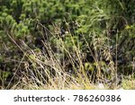 image landscape of the... | Shutterstock . vector #786260386