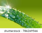 droplets of water sparkle in... | Shutterstock . vector #786269566