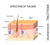 structure of the skin. skin... | Shutterstock . vector #786275068