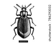 darkling beetle hand drawn... | Shutterstock .eps vector #786293032