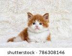 little cute kitten maine coon... | Shutterstock . vector #786308146