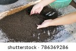 agricuture in concept bio...   Shutterstock . vector #786369286