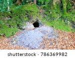 a photograph of a badgers sett... | Shutterstock . vector #786369982