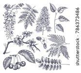 vector set of hand drawn... | Shutterstock .eps vector #786373486