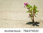 what a wonderful world  where... | Shutterstock . vector #786374032