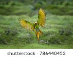 endangered parrot  great green... | Shutterstock . vector #786440452