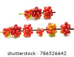 red green coffee bean isolated... | Shutterstock . vector #786526642