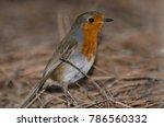 robin  erithacus rubecula... | Shutterstock . vector #786560332