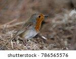 robin  erithacus rubecula... | Shutterstock . vector #786565576
