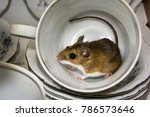 side view of a house mouse... | Shutterstock . vector #786573646