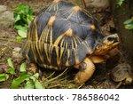 portrait of radiated tortoise... | Shutterstock . vector #786586042