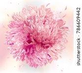 modern floral art   pink asters ... | Shutterstock .eps vector #786609442
