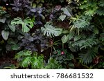 jungle plant wall | Shutterstock . vector #786681532