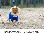 the wear  aggressive spitz dog... | Shutterstock . vector #786697282