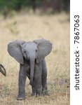 Stock photo african elephants 7867063