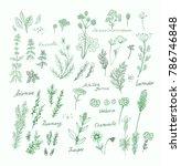 vector set of aromatic herbs  ... | Shutterstock .eps vector #786746848