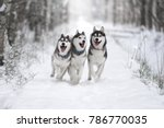 Three Of Siberian Husky Dog...