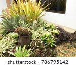 modern garden design   Shutterstock . vector #786795142