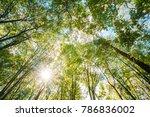 sun shining through canopy of... | Shutterstock . vector #786836002