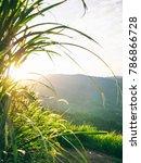 broga hill broga hill is a hill ... | Shutterstock . vector #786866728