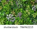wall is full of vegetation... | Shutterstock . vector #786962215
