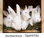 Little Bunnies With Their Mum...