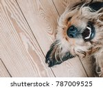 Stock photo cute dog smiling while lying on a wooden floor with its nose up showing white teeth 787009525