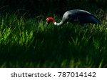 low key image of thai sarus...   Shutterstock . vector #787014142