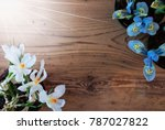 sunny crocus and hyacinth  copy ... | Shutterstock . vector #787027822