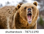 grizzly | Shutterstock . vector #78711190