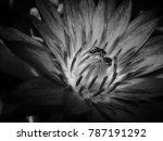 Bee Inside Lotus Black And...