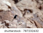 a beautiful white crowned... | Shutterstock . vector #787232632