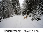 Winter Excursion With The Dog...