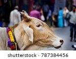 cow portrait india street | Shutterstock . vector #787384456