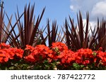 Red Plants And Foliage Against...