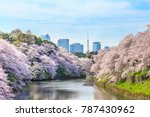 cherry blossoms at... | Shutterstock . vector #787430962